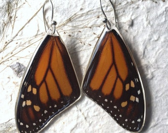 Real Monarch Butterfly Wing Earrings in Sterling Silver French Hooks