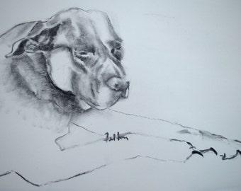 Charcoal drawing of dog dozing