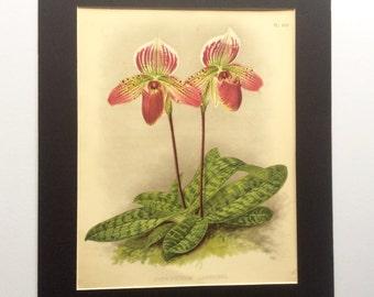 RARE Antique Botanical ORCHID 1880s Print Victorian Chromolithograph Floral Vintage