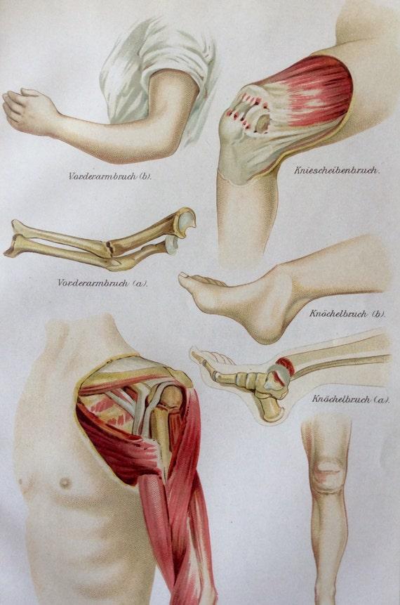Berühmt Krebse Dissektion Anatomie Ideen - Anatomie Ideen - finotti.info