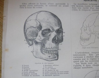 6 Antique Anatomy of the Skull Pages French Circa 1920 Paper Book Illustrations Lot SA1