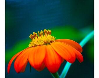 Beautiful Macro Nature Photography of a Lovely Orange Flower