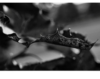 Maple Leaf in Black and White Macro Photobgraphy