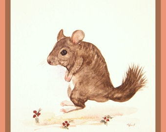 Chinchilla painting,  original watercolor,  six inch square,  wild life painting