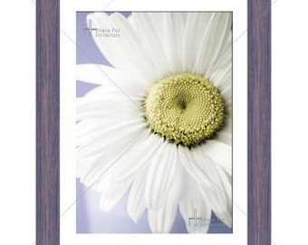 Lovely Yet Simple Daisy Floral Flower Photographic Print - Various Sizes - Gift Idea