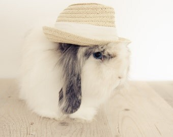 Cowboy bunny boy print