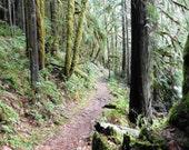 Brice Creek Forest Trail, DIGITAL DOWNLOAD, hiking trail decor, forest decor, umpqua nat, forest,  woods, fine art photography