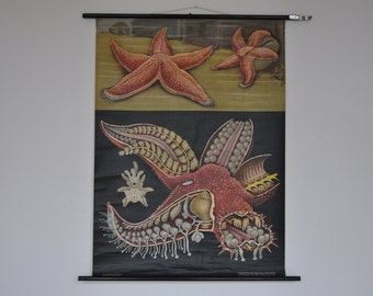 20% OFF Vintage Pull Down School Chart. Starfish. Sea Animal.  Jung Koch Quentell. Germany. Classroom Wall Chart. 1107