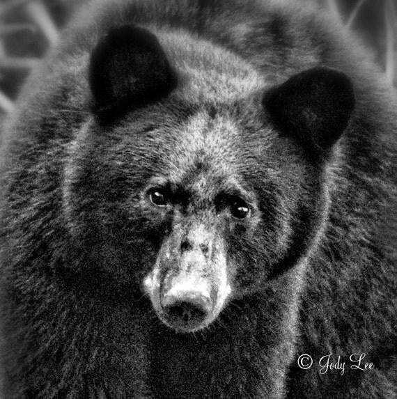Black And White Bear : Black bear white photography nature