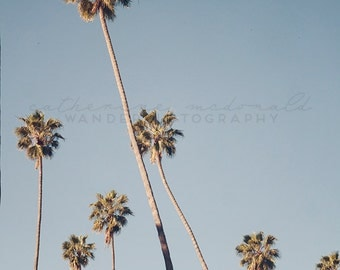 California Palm Tree Photography, Los Angeles, Palm Tree print, California Photography, Travel Photography, Eagle Rock, Bohemian, Large Art