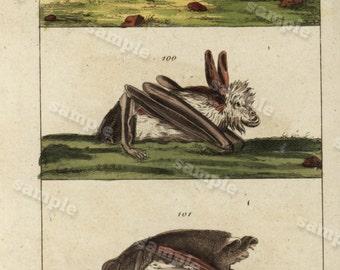 1817 Antique Original Hand colored Engraving  Of Animals -   Natural history- Bats