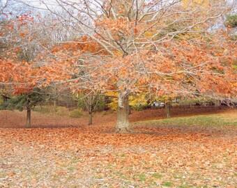 Orange Autumn Photograph - Fall Foliage - Autumn Tree Art -  Wall Decor - Landscape  Photograph - New York Autumn - Nature Photograph
