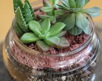 Succulent Arrangement, Succulent Terrarium