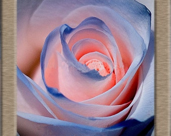 sommon blue rose seeds,394,roses seeds, roses from seeds,planting roses,growing roses from seeds,seeds for roses