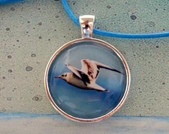 Flying Gull - Gull chain - maritime node chain