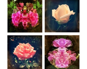 Flower Photography Prints, Floral Wall Art Set, Abstract Nature Photography, Surreal Art, Fine Art Prints, Home Decor, Set of 4 Prints