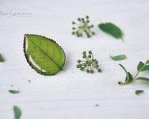Green leaf brooch,  real pressed leaf , real Rose leaf, resin jewelry, spring jewelry