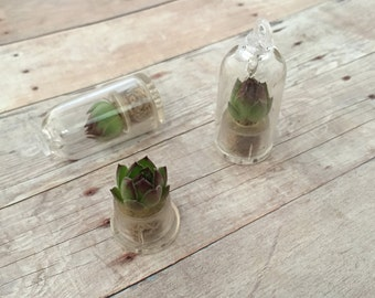 Living Terrarium Necklace Rose Plant Pendant Floating Capsule Succulent Globe Charm Echeveria Crassulaceae Floating Plant Jewelry Supplies