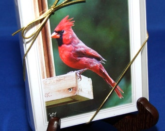 Northern Cardinal Note Cards