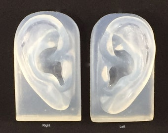 Translucent Pair of Ear Models for Jewelry Display - SALE LIMITED TIME