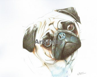 Beautiful pencil drawing print of a cute Pug Dog signed by UK artist