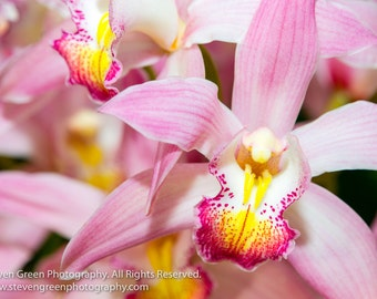 Pink Orchid Signed Photo Print