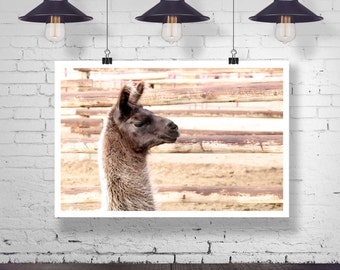 Photograph - Silhouette Profile of a Llama Head - Fine Art Photography Print Wall Art Home Decor