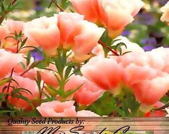 Clarkia GODETIA LIGHT SALMON Flower Seeds - bright colors - Clarkia amoena