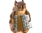 Accordion, Funny Animal Art, Musician Gifts, Squirrel Print, Funny Animal Prints, Music Gifts, Funny Art Print,Music Art,Squirrel Photograph
