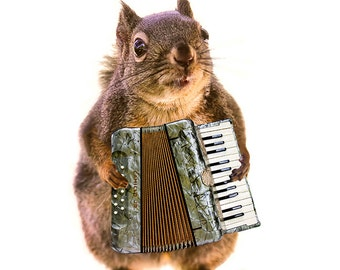 Accordion, Funny Animal Art, Musician Gifts, Squirrel Print, Funny Animal Prints, Music Gifts, Funny Art Print,Music Art,Squirrel Photograph