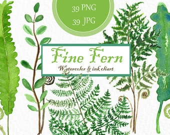 Fern forest Watercolor and ink clipart hand drawn. Forest watercolor, light green, tender green branches, wedding invitation.