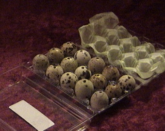 30 count of quail eggs. quail egg shells. blown eggs. spotted quail eggs. eggs. small quail eggs. art and craft. egg necklace. egg earring.