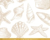 Sandy Seashell & Seastar Clipart Set - INSTANT DOWNLOAD - 17 .PNG Images