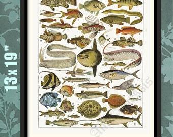 Fish of the Mediterranean 1, Vintage Atlas Repro, Marine Life Print, Marine Life Art, Marine Life Decor,Marine Life Gift,Fish Print,Fish Art