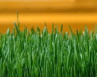 FRESH CUT GRASS.... candle fragrance