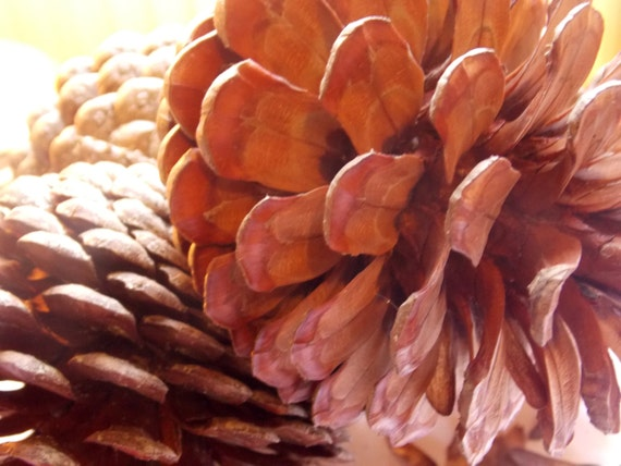 Large pine cones 39 monterey pine 39 x 5 christmas by wyllowytch for Large christmas pine cones