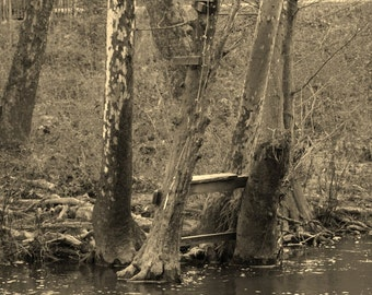 Creek Life 2 (Creek Life Series)