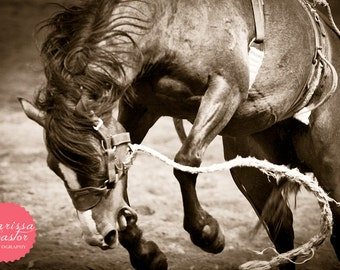 "Cowboy bucking bronc black and white photographic print, ""Aftermath"""