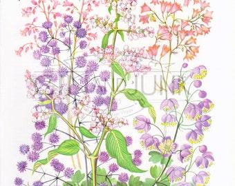 VINTAGE FLORAL PRINT, 1970's flower Print 3 for 10