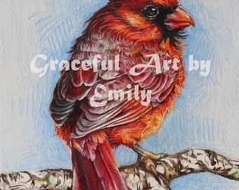 Red Male Cardinal Bird (Original Colored Pencil Drawing)
