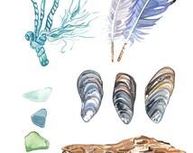 Beach-combing Sea Shell Coastal Art Print