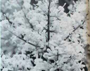 Black & White Beauty in the Garden