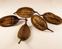 10 Waratah Pods, Seed Pods, Unusual Seed Pods, Nature Supplies, Australian Nature, Terrarium Supplies, Craft Supplies, Vase Filler