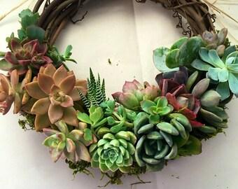 "10"" succulent wreath KIM"