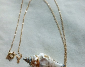 Gold filled Conch Sea Shell Necklace 18""