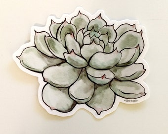 Watercolor Succulent Vinyl Sticker