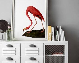 Vintage Flamingo, Pink Flamingo, Flamingo, Antique Flamingo, Ad, Audubon, bird art, Natural Science, Natural History Art, bird print, poster