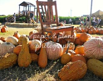 8x10 pumpkin patch photograph