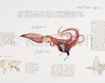 Keel Billed Squid - Watercolor Print, Wildlife Print, Hybrid Painting, Animal Hybrid, Nature Print, Keel Billed Toucan, Squid (ships free)