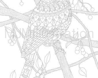 Printable Decorative Blue Jay Instant download adult colouring page